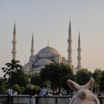 Where is Piggy in Turkey?
