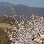Where is Piggy in China?