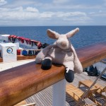 Where is Piggy in the Galapagos Islands?