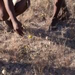 BushmenKalahari-1100616