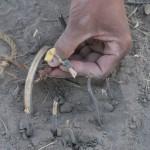 BushmenKalahari-1100644