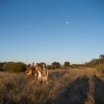 BushmenKalahari-1100656