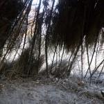 BushmenKalahari-1100672