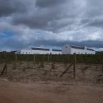 CapetownWine-1100136