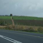 CapetownWine-1100197