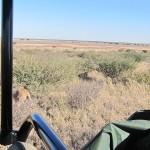 Kalahari-0360