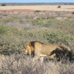 Kalahari-0364