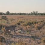 Kalahari-0501