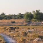 Kalahari-0502