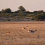 Kalahari-1100398