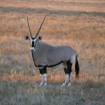 Kalahari-1100402