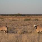 Kalahari-1100464