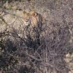 Kalahari-1100507