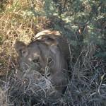 Kalahari-1100512