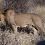 Kalahari-1100545