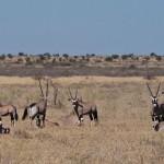 Kalahari-1100581