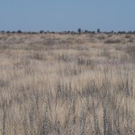 Kalahari-1100593