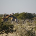 Kalahari-1100697