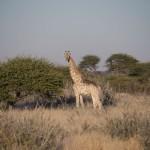 Kalahari-1100704