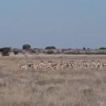 Kalahari-1100746