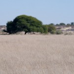 Kalahari-1100750