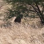 Kalahari-1100754