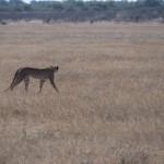 Kalahari-1100782