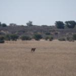 Kalahari-1100786