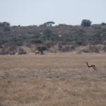 Kalahari-1100790
