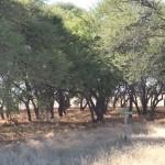 Kalahari-1100802