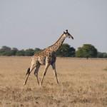 Kalahari-1100815