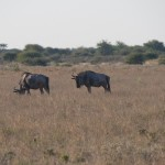 Kalahari-1100829