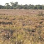 Kalahari-1100842