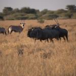 Kalahari-1100854