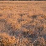 Kalahari-1100866