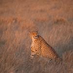 Kalahari-1100870