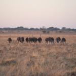 Kalahari-1100940