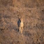 Kalahari-1100951
