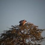 Kalahari-6132046