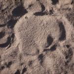 Kalahari-6152146
