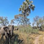 OkavangoDelta-0553