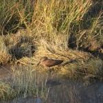 OkavangoDelta-0588