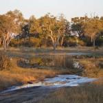 OkavangoDelta-0592