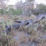 OkavangoDelta-0610