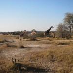 OkavangoDelta-0626