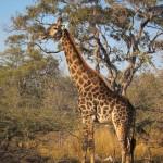 OkavangoDelta-0637