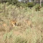 OkavangoDelta-0662