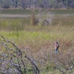OkavangoDelta-0718