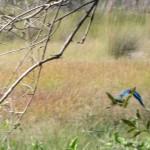 OkavangoDelta-0719