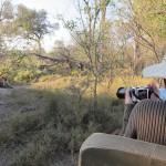OkavangoDelta-0741